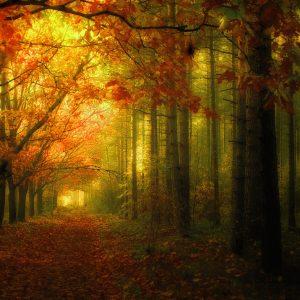 bosco-autunno1-jpgw1024h1024